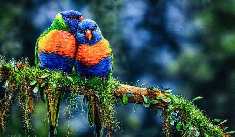 15 Most Colorful Birds In The World Probably You Don T Know